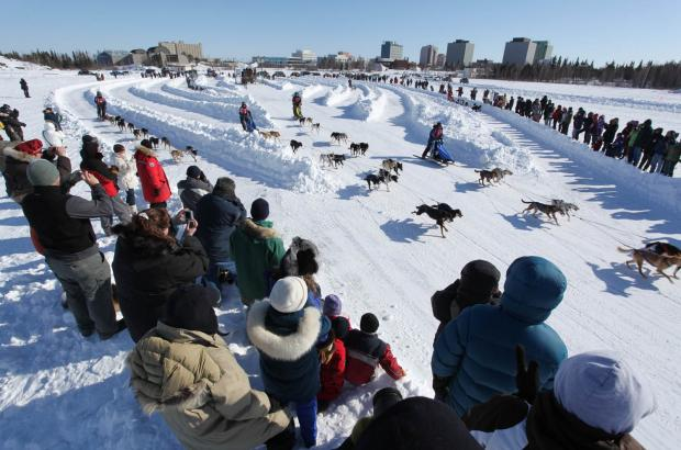 Dog Sled Race, Yellowknife, North Slave Region