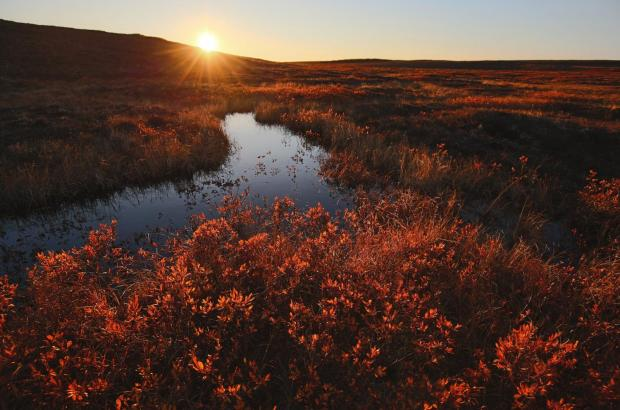 Fall in the Tundra, Beaufort Delta Region